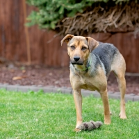 Rescue Dolly 1 200x200 Dolly   Adoption Pending
