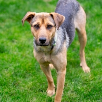 Rescue Dolly 3 200x200 Dolly   Adoption Pending